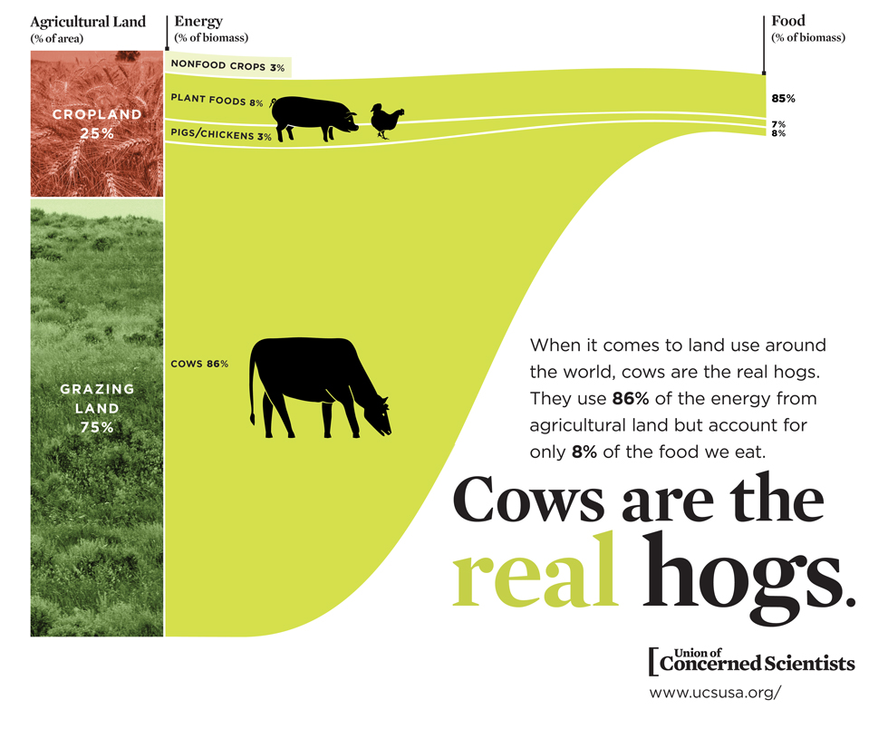 Cows-Hogs-980px